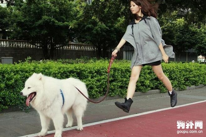 如何让狗儿悠闲地跟着你散步_0